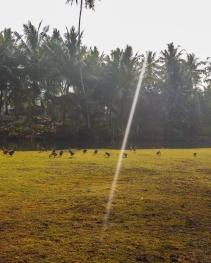 Indo Animals-2