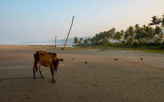 Indo Animals
