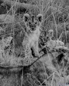 cubs-2